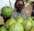 PNG agriculture requires a simple and achievable plan